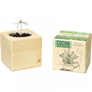 Набор для выращивания Сосна, Экокуб