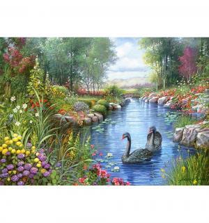 Пазл  Черные лебеди 1500 шт. Castorland