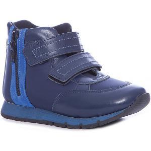 Ботинки для мальчика Minimen. Цвет: синий