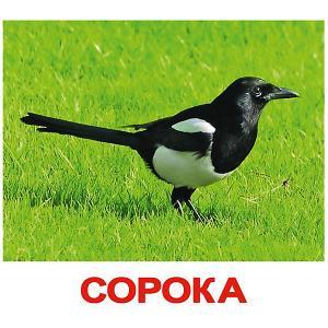 Набор обучающих карточек  Птицы 20 штук Вундеркинд с пелёнок