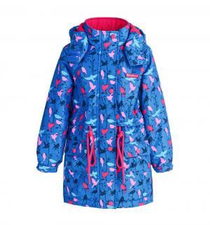 Куртка  Весенняя вильсония, цвет: синий Premont