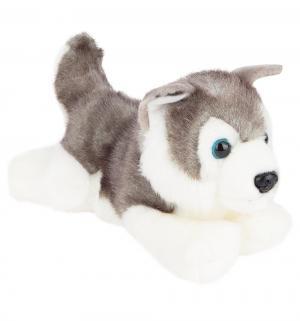 Мягконабивная игрушка  Хаски 25 см Aurora