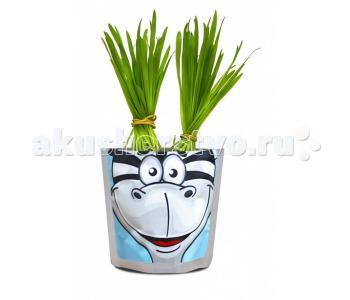 Набор для выращивания Зебра Happy Plant